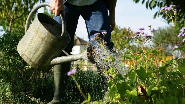 Gros plan sur un jardinier arrosant une plate-bande de fleurs