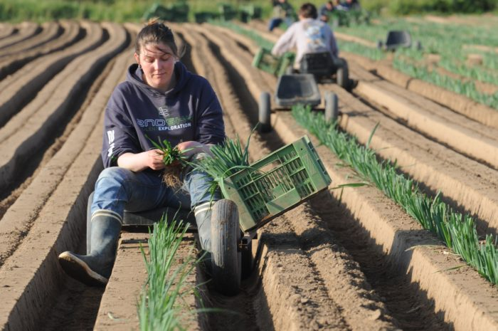 agricultrice dans un champ cultivé
