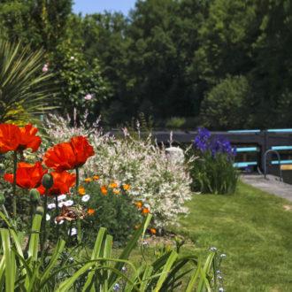 Fleurs devant l'écluse de la Ville Morin à Guipel, sur le canal d'Ille-et-Rance (35)