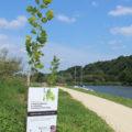 Petits arbres nouvellement plantés le long d'un canal